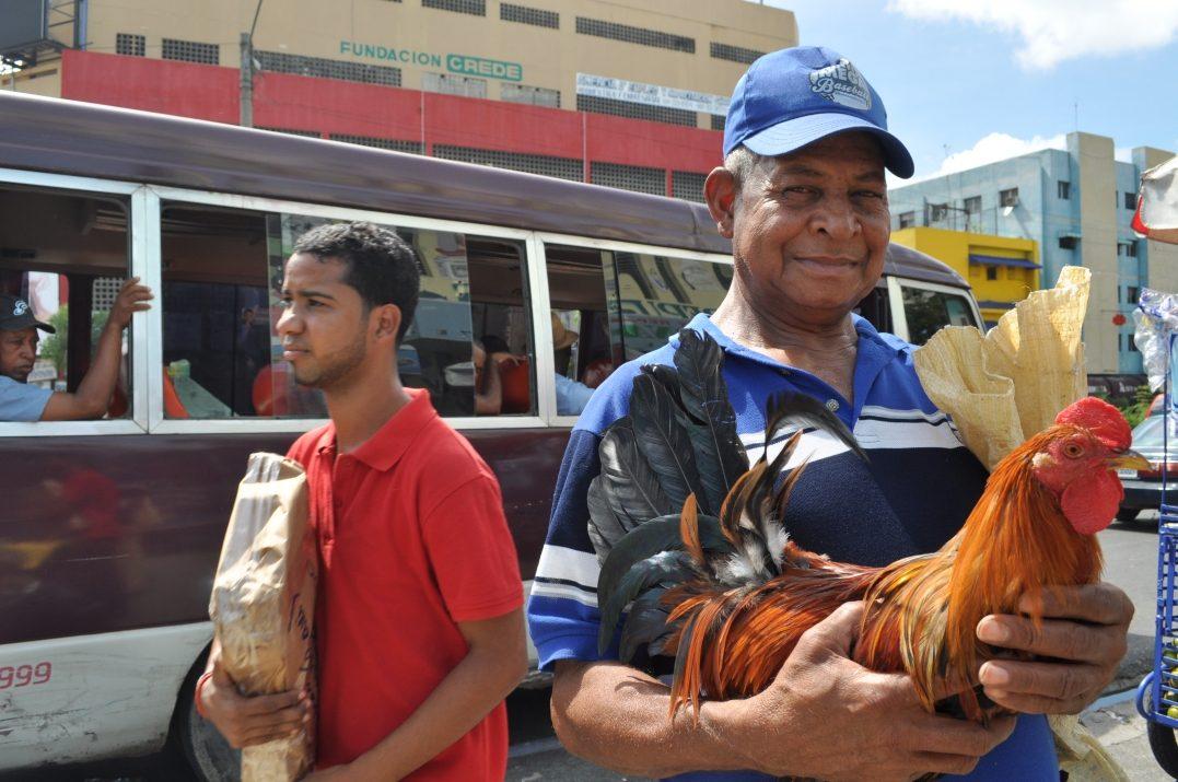 Na ulicy w Santo Domingo człowiek zwany el gallero prezentuje swego koguta bojowego