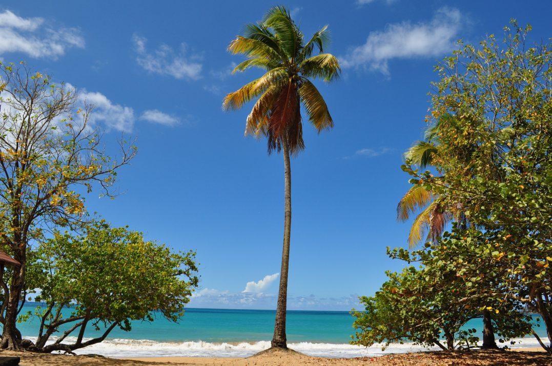 """Na Gwadelupie, na Basse-Terre, w Deshaies kręcono serial """"Śmierć pod palmami""""."""