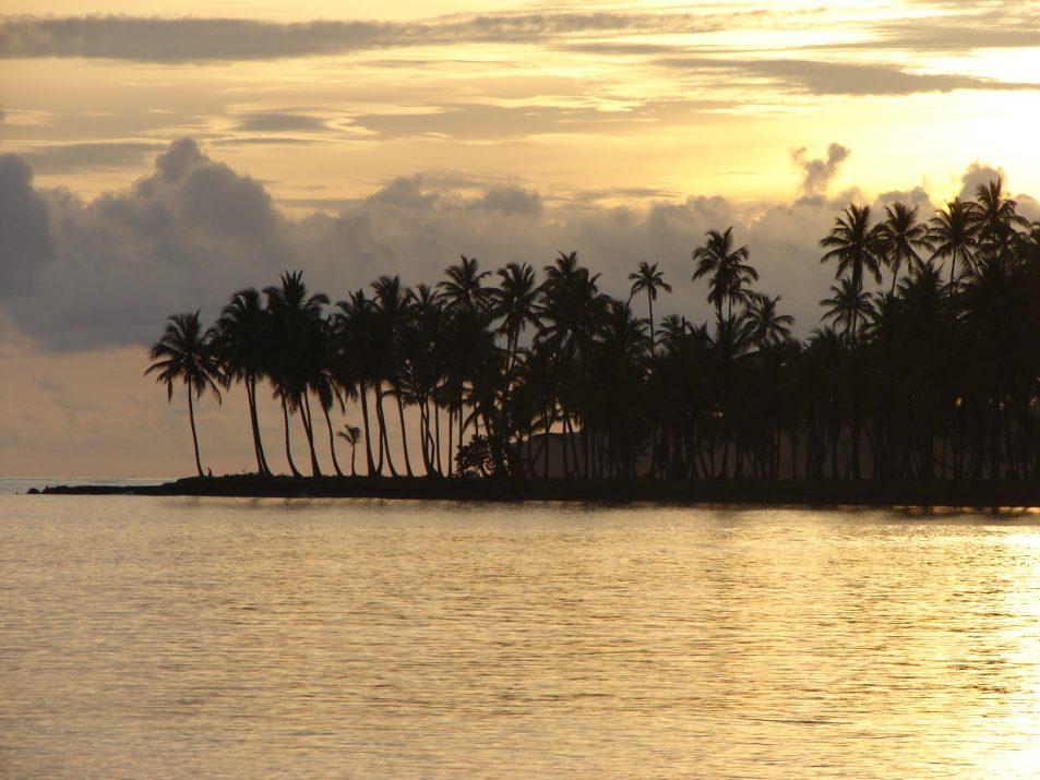 Zachód słońca i palmy kokosowe w Las Galeras w Dominikanie