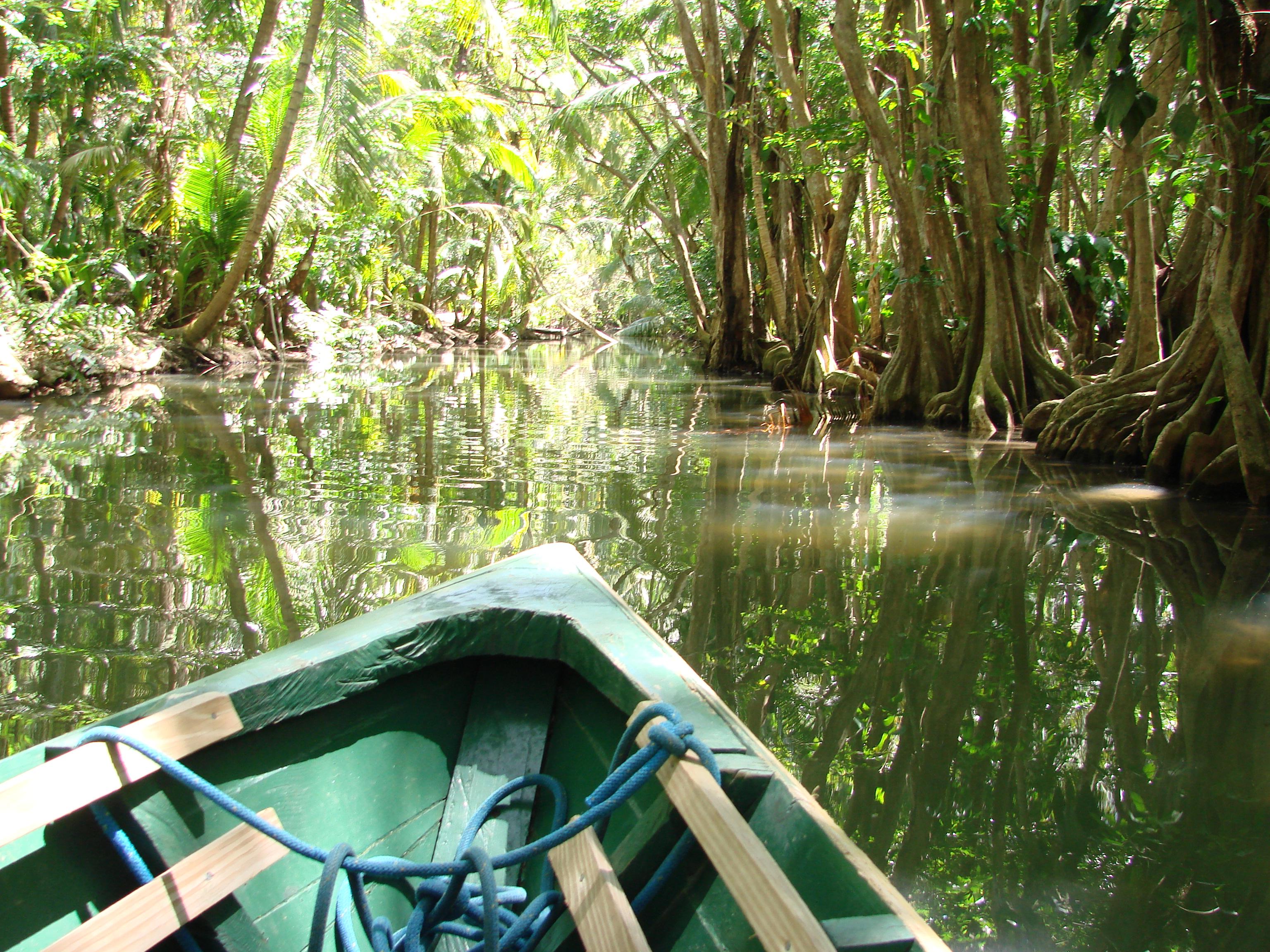 Indian River na karaibskiej wyspie Dominice to rzeka Piratów z Karaibów