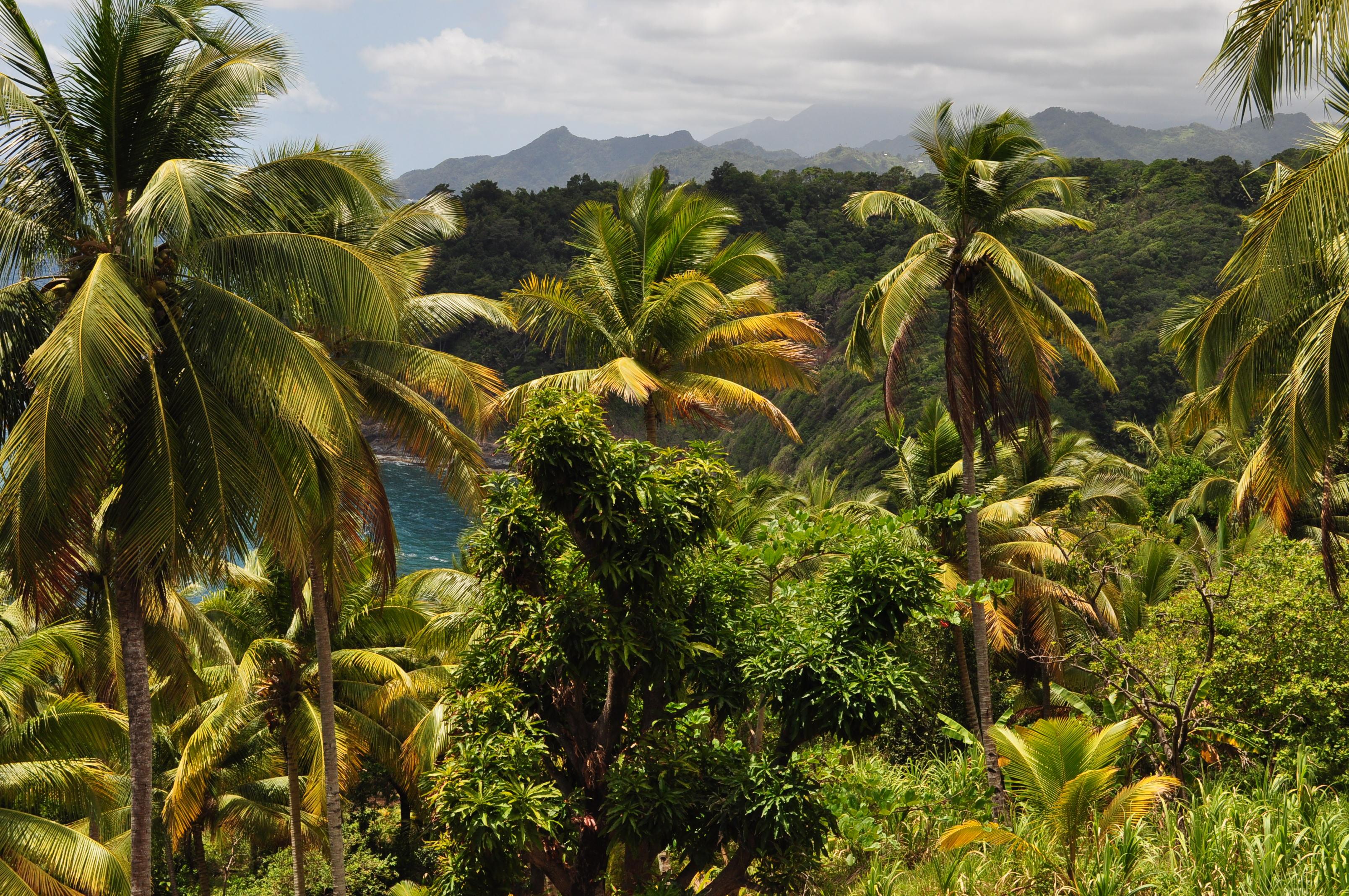 Okolice Castle Bruce, blisko Terytorium Karaibów, wyspa Dominika