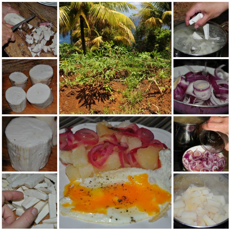 Maniok zwany yuca w Kolumbii, albo Dominikanie