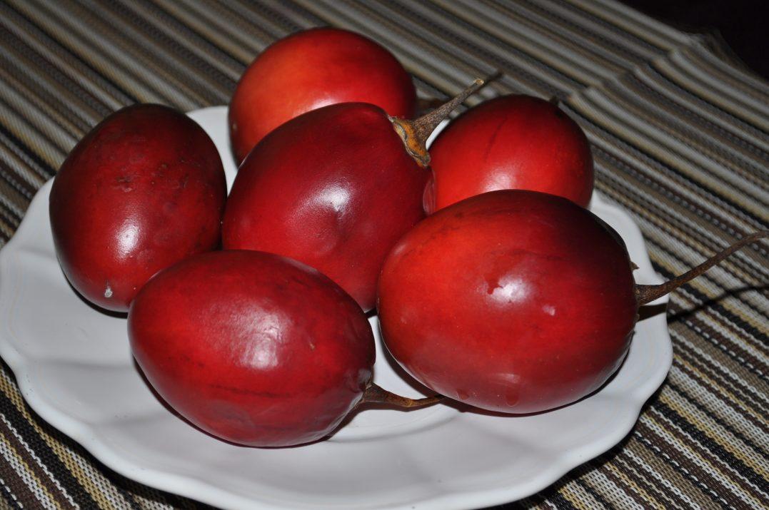 Tomate de árbol, tamarillo, można kupić w Polsce.