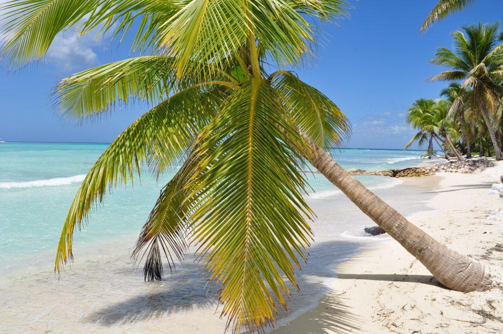 Wybrzeże Morza Karaibskiego, palmy, plaża, wyspa Saona.