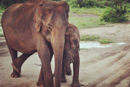 Słońce i słonie