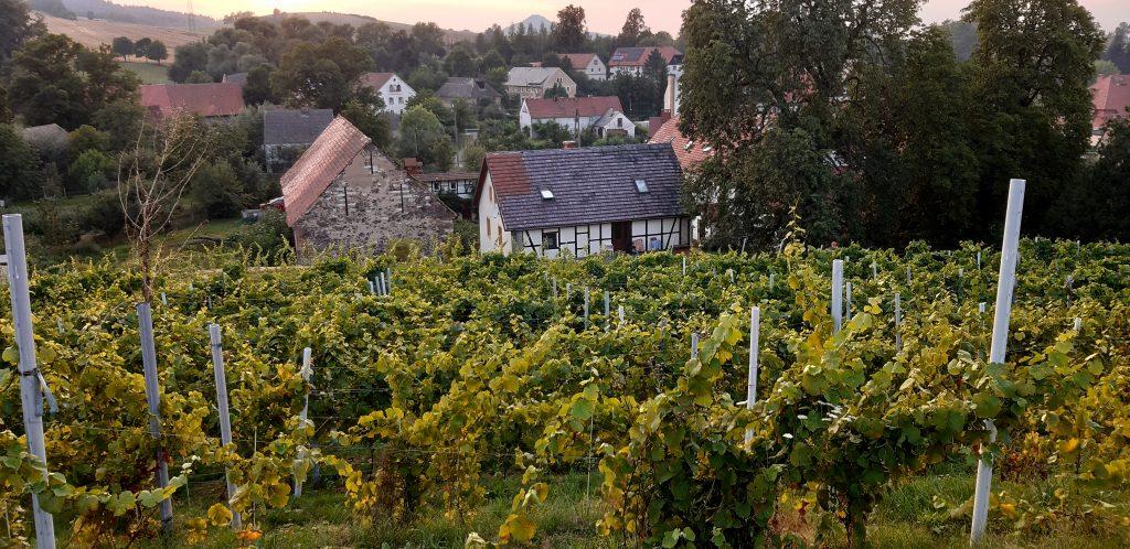 Winnica Agat w Sokołowcu