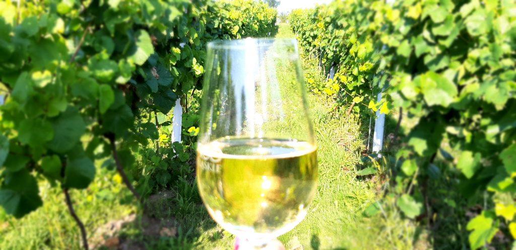 Białe wino. Winnica Agat w Sokołówcu